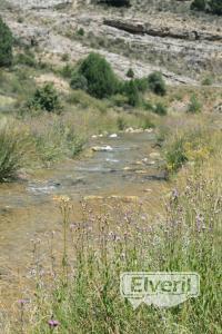 El rio es muy chipo aqui arriba, sent by: basileo