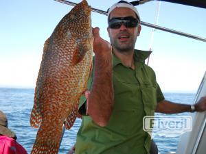Pinto de 3,1kg pescado en el barco Maregalia 1º, Rías Baixas Gallegas., sent by: Maregalia, salidas de pesca en barco en Galic (Not registered)