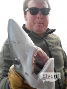 Pucho, con un tiburon azul, liberado., en el Maregalia1º,Galicia., sent by: Maregalia pesca litoral y altura Rias Baixas  (Not registered)