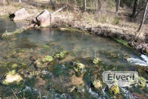 El rio., enviado por: Administrador