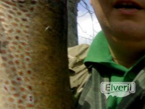 Untitled image, sent by: bena (Not registered)