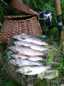 truchas del norte, envoyé par: pesqui (Non enregistré)
