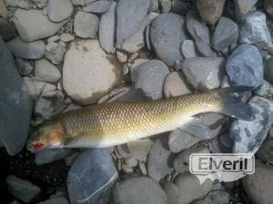 Rio Urola, envoyé par: Eneko (Non enregistré)