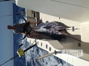 Blue Marlin, sent by: Blue marlin (Not registered)