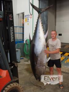 atun gigante, sent by: enrique (Not registered)