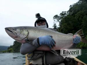 King salmon con mosca, envoyé par: Johansen