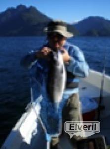 Pesca Chapo, sent by: Alfredo Labbé (Not registered)