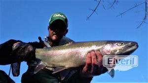 Steelhead Walnut Creek PA, enviado por: Trico