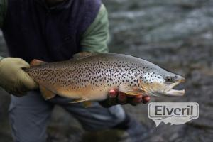 Beautiful Brown, sent by: Latitude Guiding (Not registered)