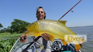 Dorado en Spinning, sent by: J.L.B. (Not registered)
