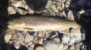 Reo de meses de rio, sent by: Pescado en Gipuzkoa (Not registered)