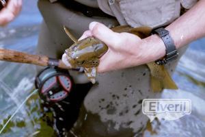Secuencia de pesca IX, sent by: kazan
