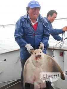 Javier, con una raya de 20 kg.a bordo del Maregalia1º, charter., sent by: Pesca charter en el Maregalia 1º Rías Baixas  (Not registered)
