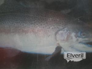Rio Urola, sent by: erreka (Not registered)