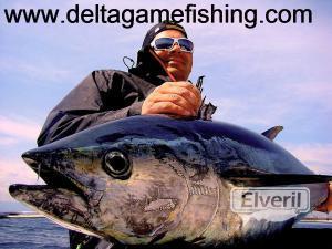 atunes delta del ebro, sent by: Delta Game Fishing (Not registered)