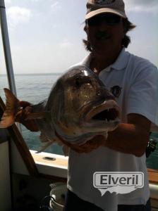 Denton. Currican de fondo., sent by: pescaenbarco.com (Not registered)