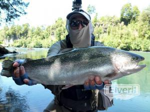 King salmon, , sent by: Johansen