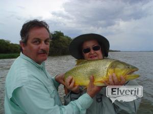 Mas dorados en Corrientes, sent by: Johansen
