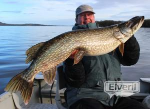 Lough Derg big pike, sent by: Herman Molenaar (Not registered)