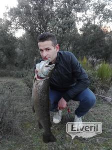 Trucha del rio Llobregat, sent by: Barrax (Not registered)